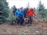 Feuerholz sammeln
