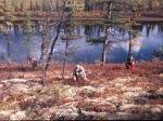 Hermine, Lothar und Walter sammeln Blaubeeren