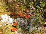 Pilze und Flechten