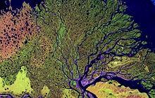 220px-Lena_River_Delta_-_Landsat_2000